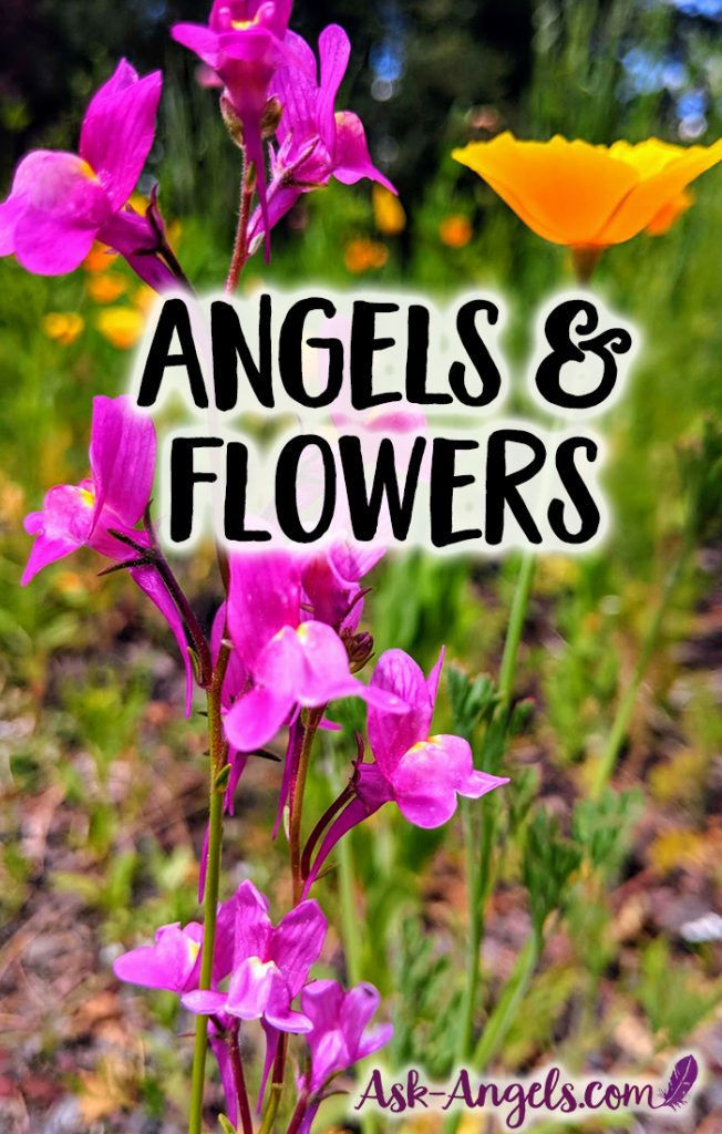 Angels and flowers really do go together hand in hand. Learn more about the angelic energy of flowers and how they can help you connect with angels!