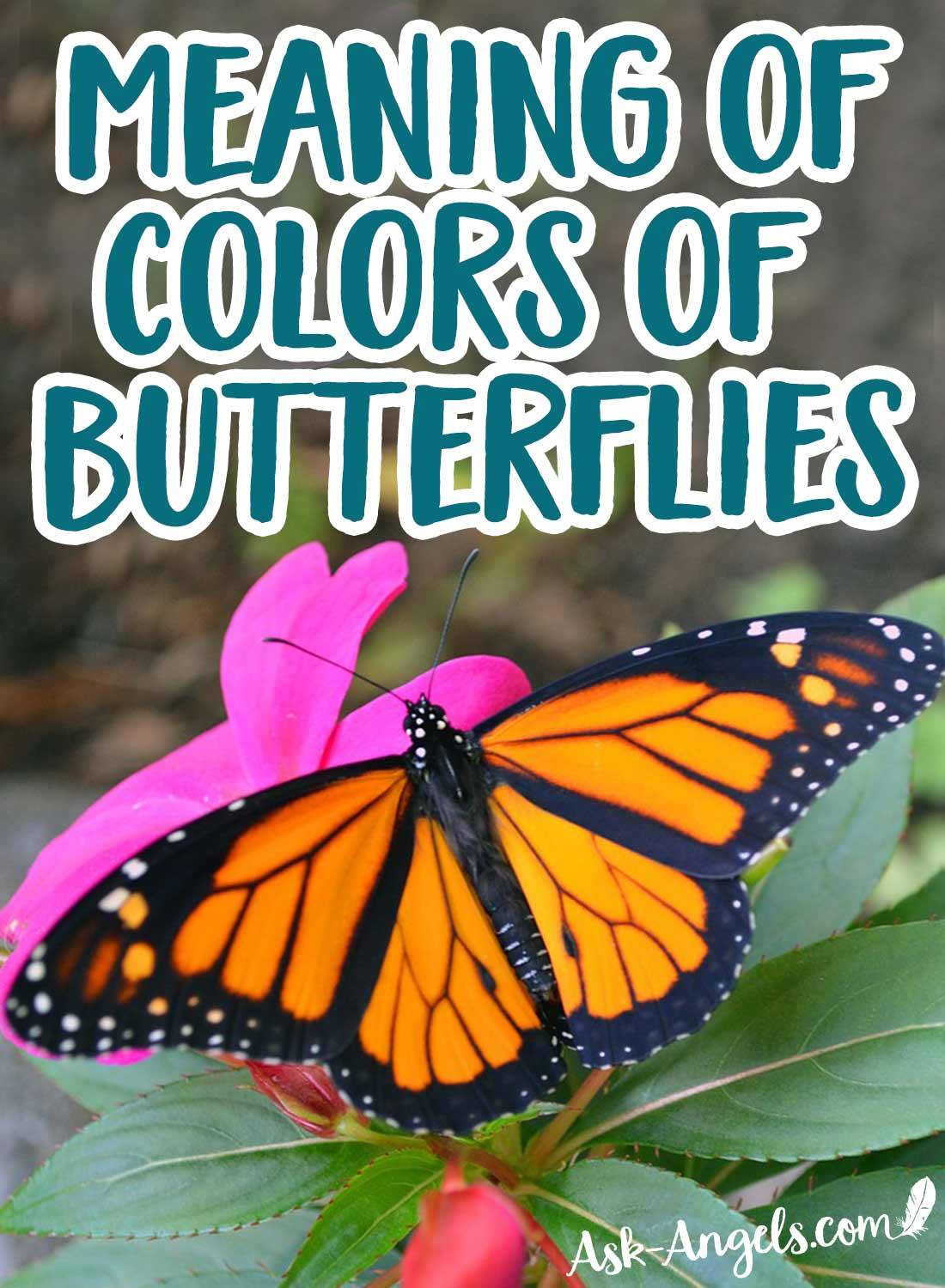Meaning of Certain Colors of Butterflies