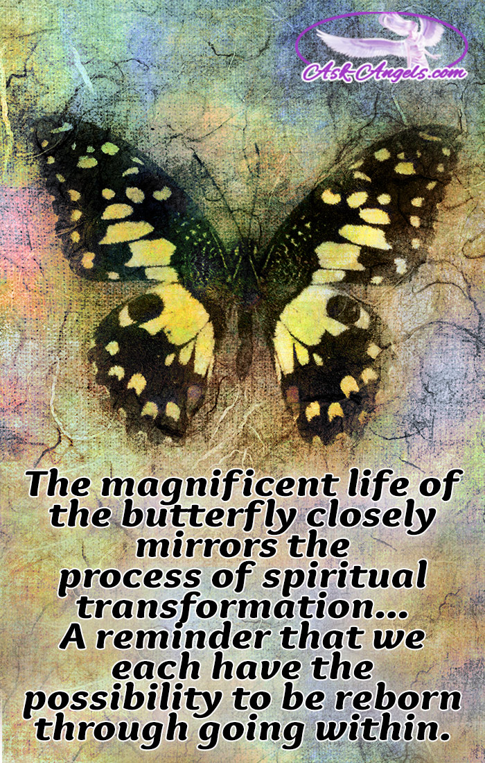 Butterfly Meaning Symbolic And Spiritual Meaning Of Butterflies