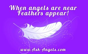 654753412 Angel Feathers. What Is The Meaning of Finding Feathers?
