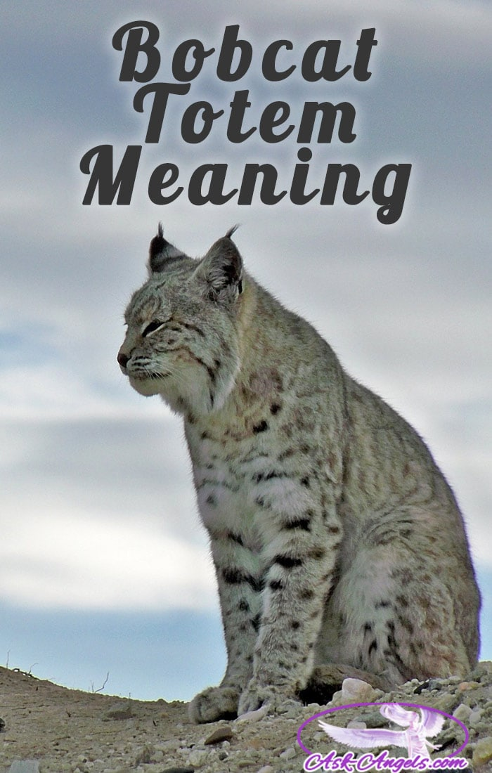 Bobcat Totem Meaning