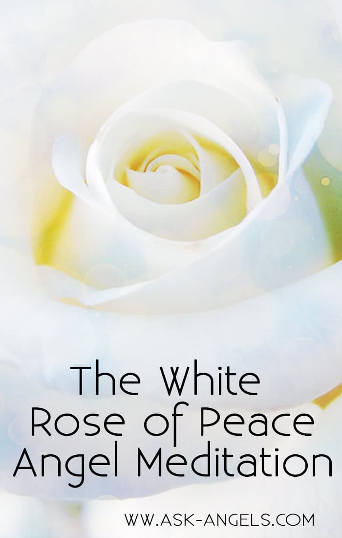 White Rose of Peace Meditation
