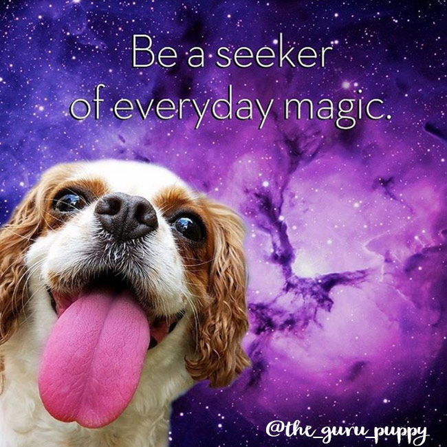 The Guru Puppy- Spiritual Instagram