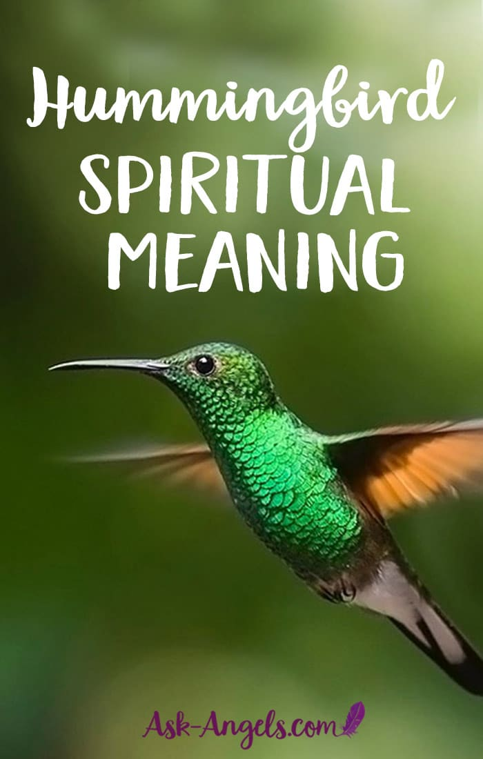 hummingbird meaning symbolic and spiritual meaning of free clipart of hearts free clipart of hearts