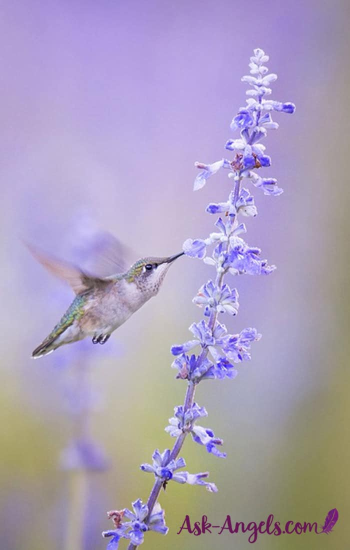 Hummingbird Meaning Symbolic And Spiritual Meaning Of Hummingbirds