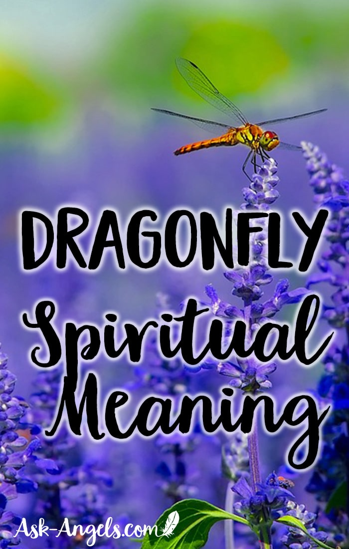 Dragonfly Meaning What Is The Spiritual Meaning And Symbolism